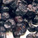 Tips To Identify Rotten Blueberry